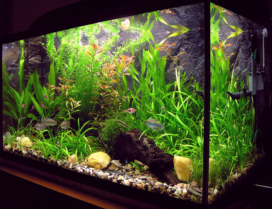 smart aquarium